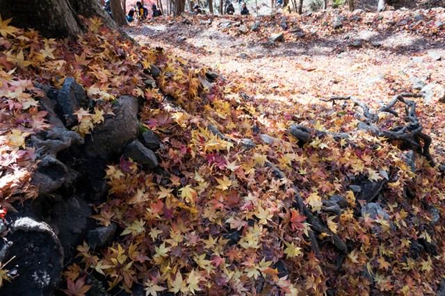 가을이 저물어 간다
