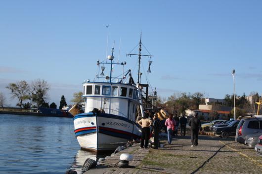 Забраняват улова на есетрови риби в българската акватория на Черно море и Дунав 3