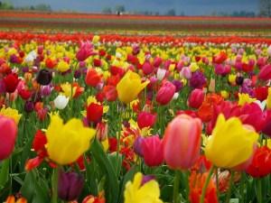 Днес е Цветница! Празнична програма в Созопол 2