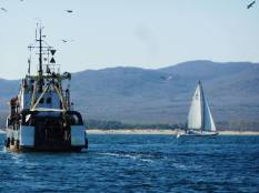 Риболовни кораби и яхти