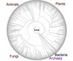 Image result for last universal common ancestor (luca)