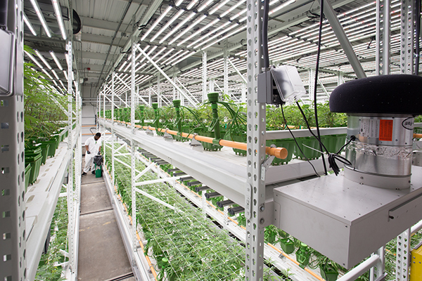 study commercial grow room setup on Commercial Hydroponic Systems Design id=60571