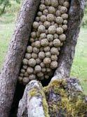 fungo plastica, by Barbara De Pirro