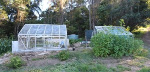 midlevels greenhouse