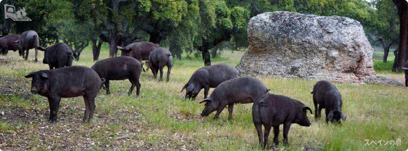 大切なあの方のお祝いにイベリコ豚を贈りませんか?
