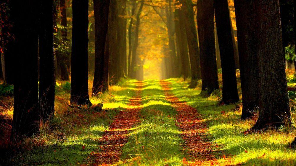bosque-rural
