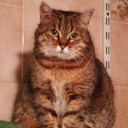 Fifille ♀ Bar à chats