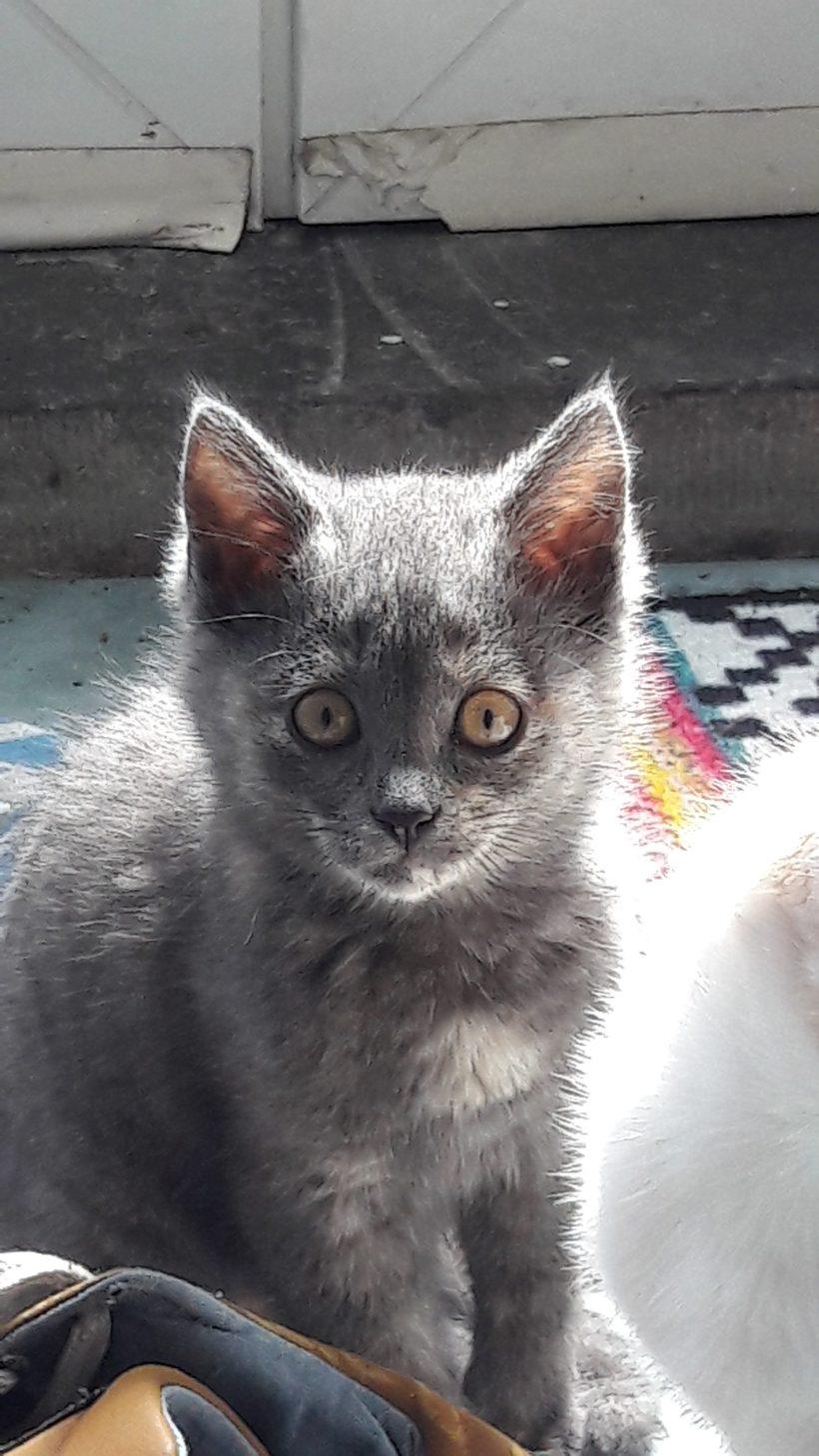 Potiron  ⚥  chatons – FA (en attente de visite)