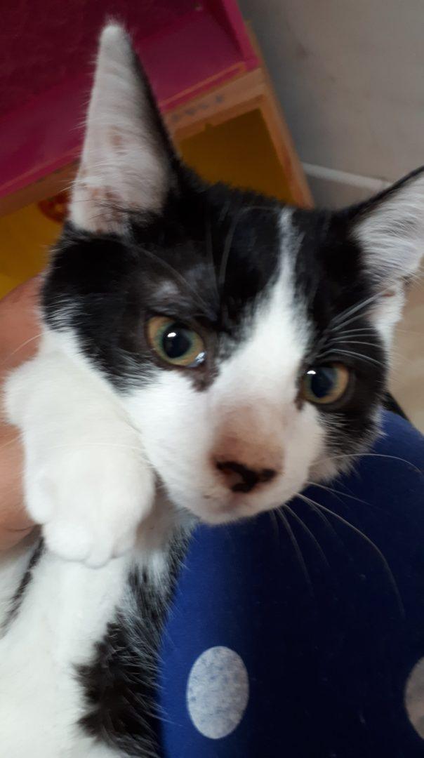 Zalando ♂ chaton – FA
