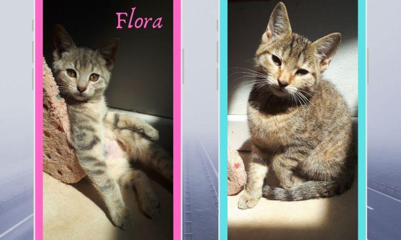 Flora & Fauve ♀ chatons – FA