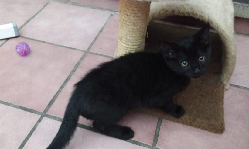 Una ♀ chaton – FA