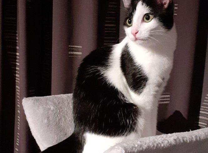 Soya ♀ grand chaton – FA (vidéo) – réservée