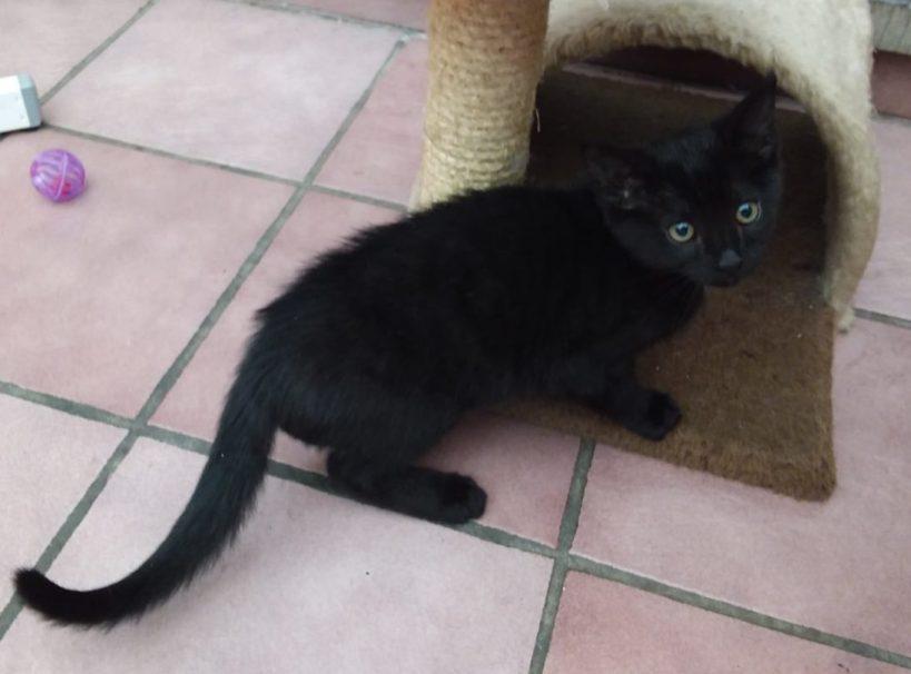 Domino ( Réservée )  ♂ & Douchka ( contact en cours )  ♀ chatons – FA