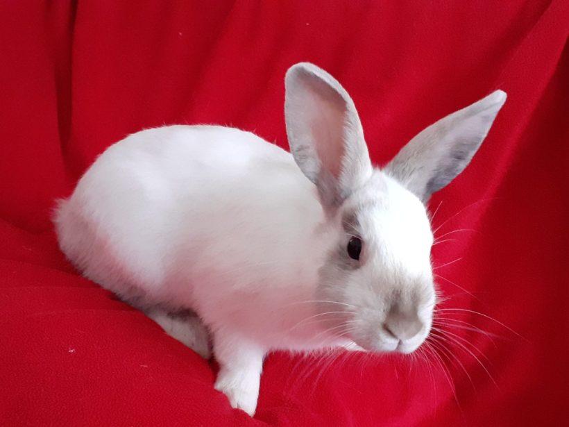 Youpi & Twist ♂ lapins – FA