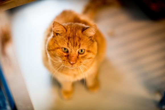 Garfield ♂ Refuge (adoption de coeur)