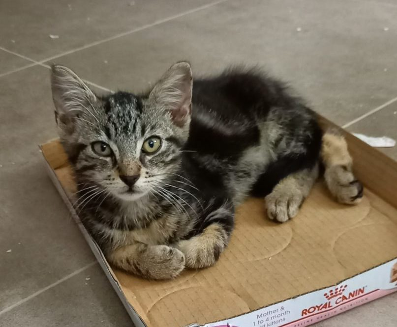 "Les petits ""U""rluberlus ♀ ♂ chatons – FA (en attente pour tous)"