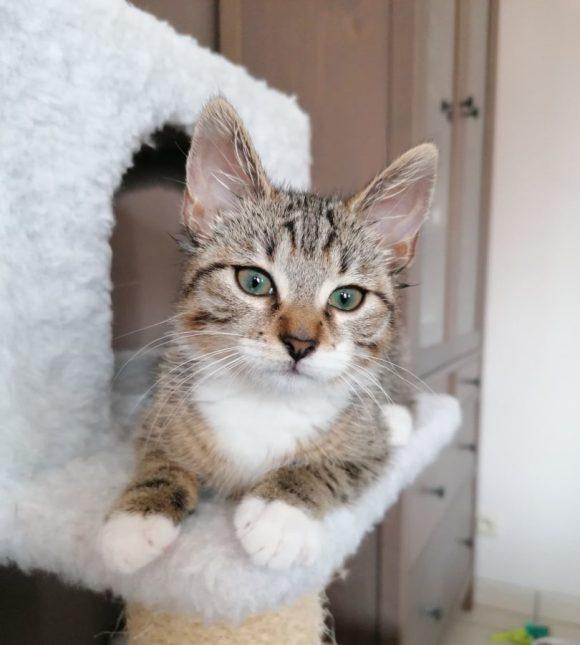 Iago ♂ chaton – FA (demande en cours)