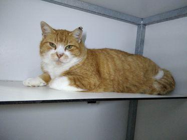 Biscuit ♂  Bar à chats