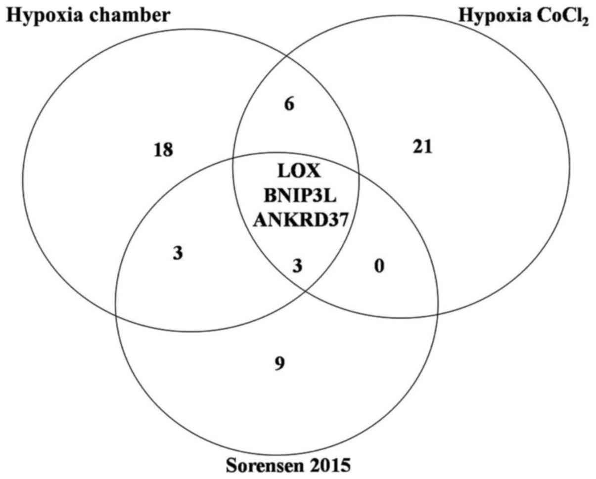 Comparison Of Specific Expression Profile In Two In Vitro