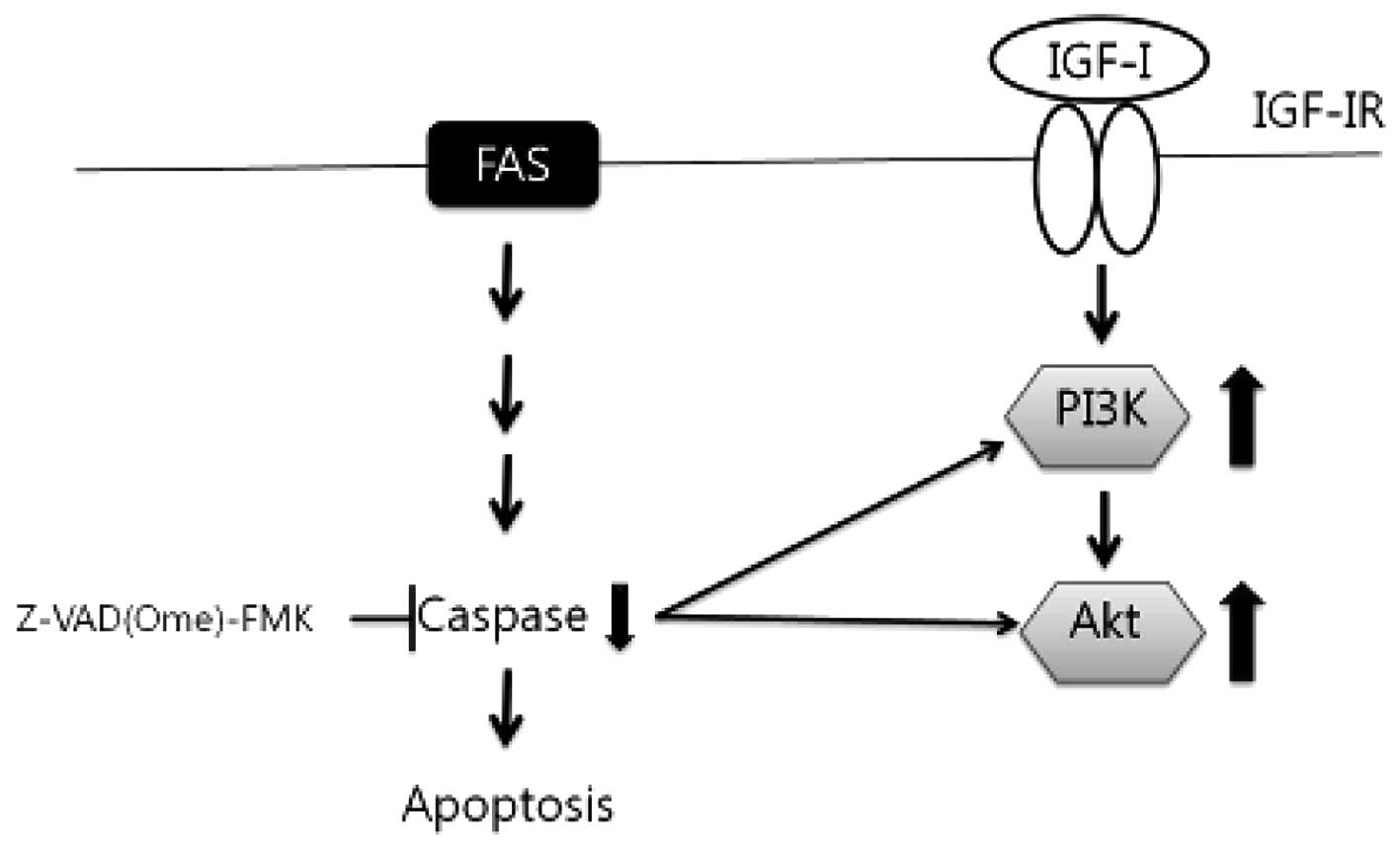 Induction Of Apoptosis By Laminarin Regulating The