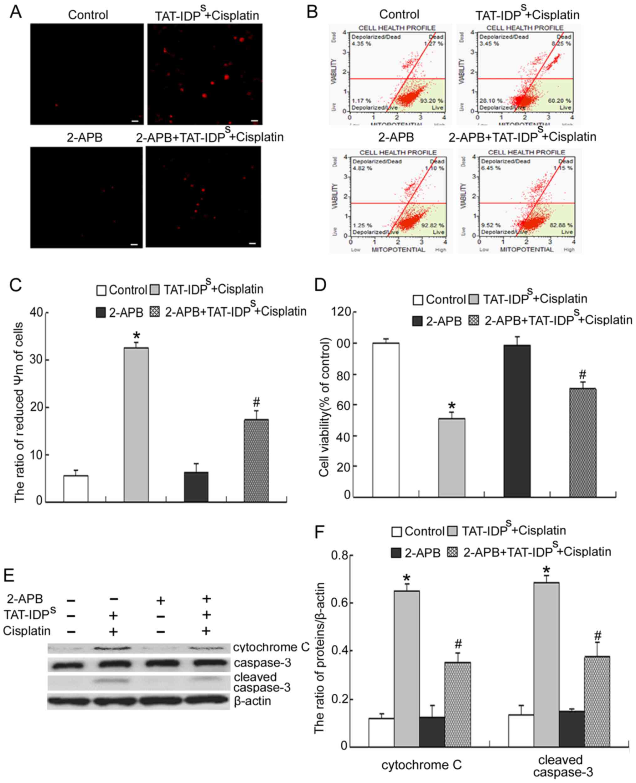 Tat Fused Ip3r Derived Peptide Enhances Cisplatin Sensitivity Of Ovarian Cancer Cells By