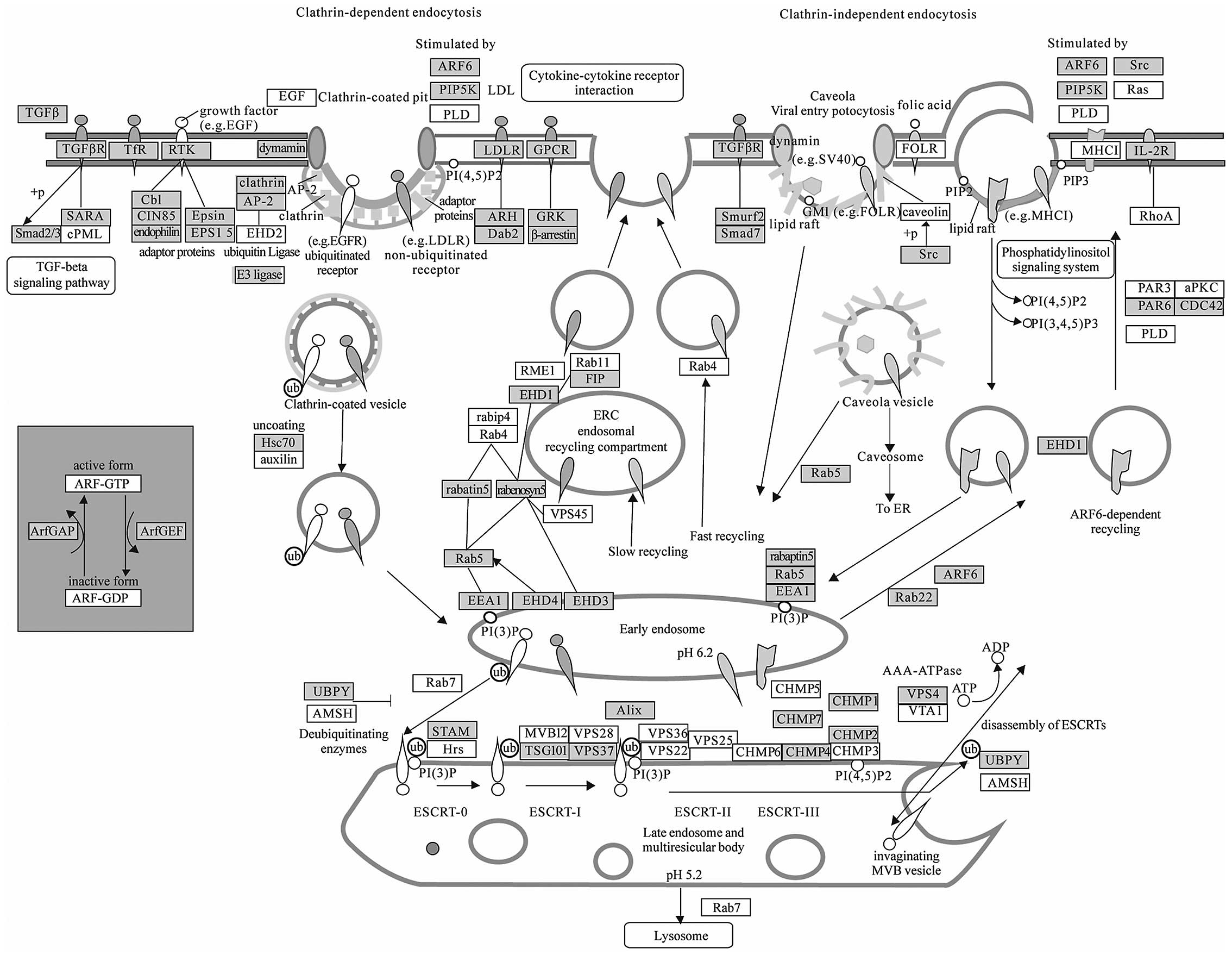 Pathwayysis Of Cancer Associated Microrna Targets