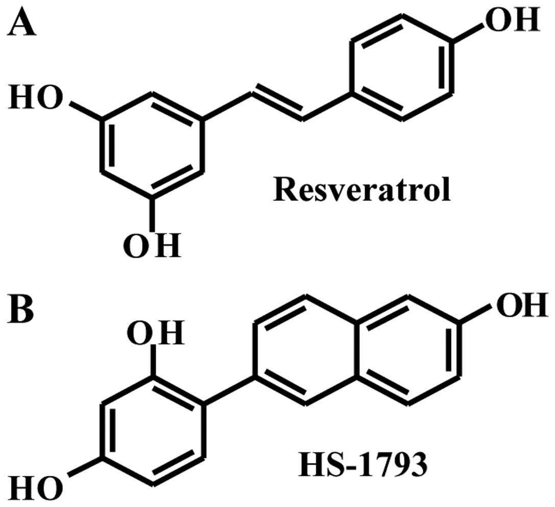 Hs A Resveratrologue Induces Cell Cycle Arrest And Apoptotic Cell In Human
