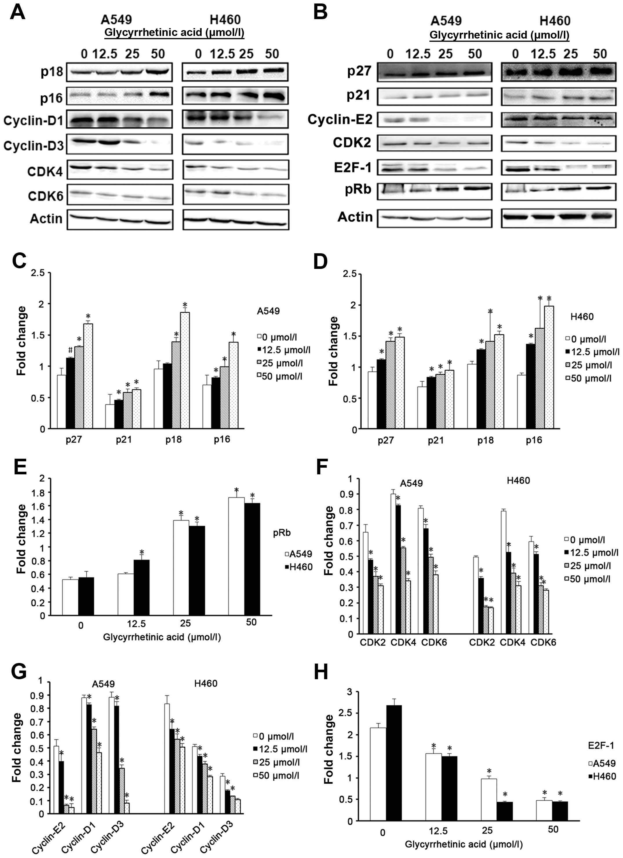 Glycyrrhetinic Acid Induces G1 Phase Cell Cycle Arrest In