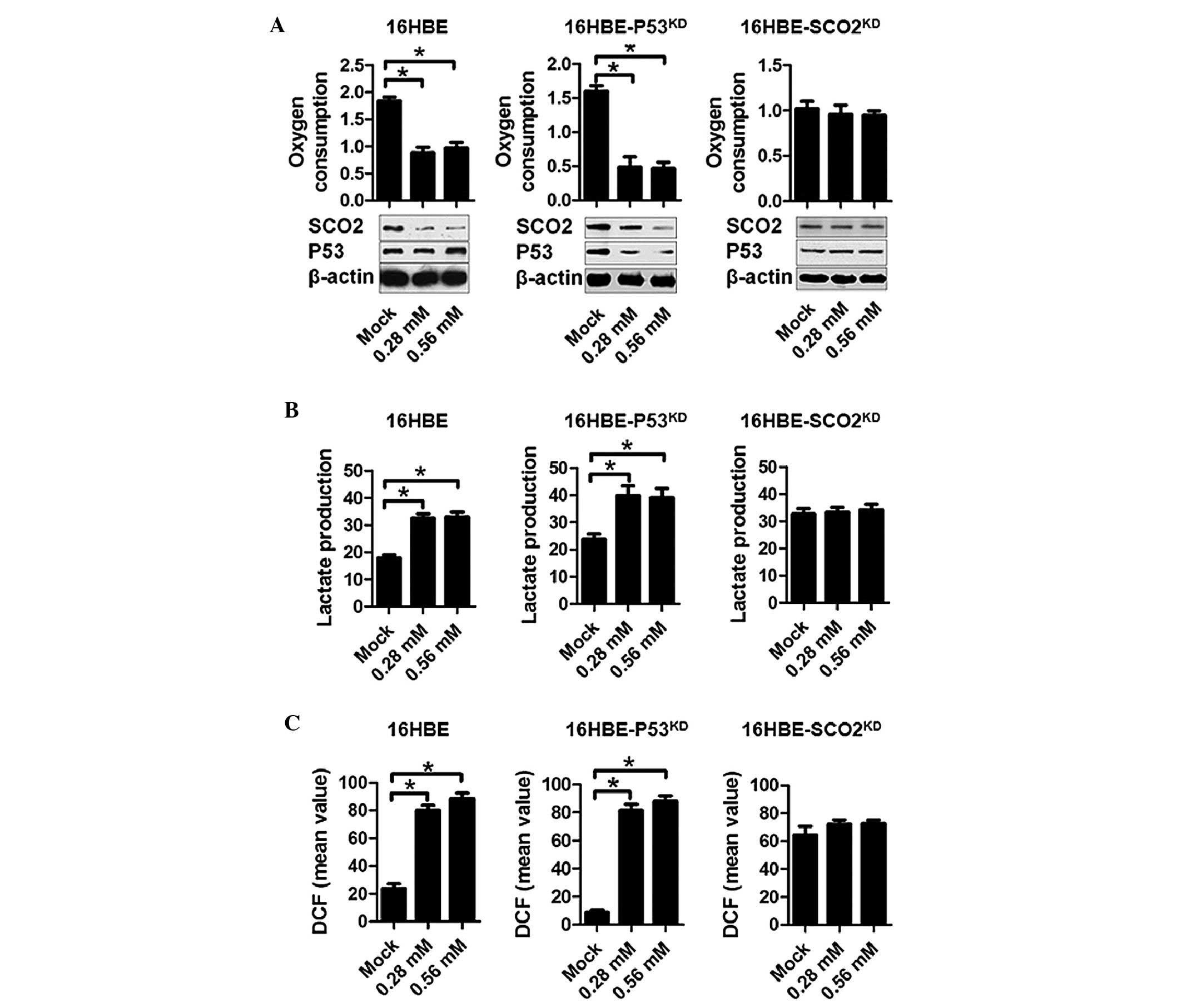 Emulsified Isoflurane Treatment Inhibits The Cell Cycle And Respiration Of Human Bronchial