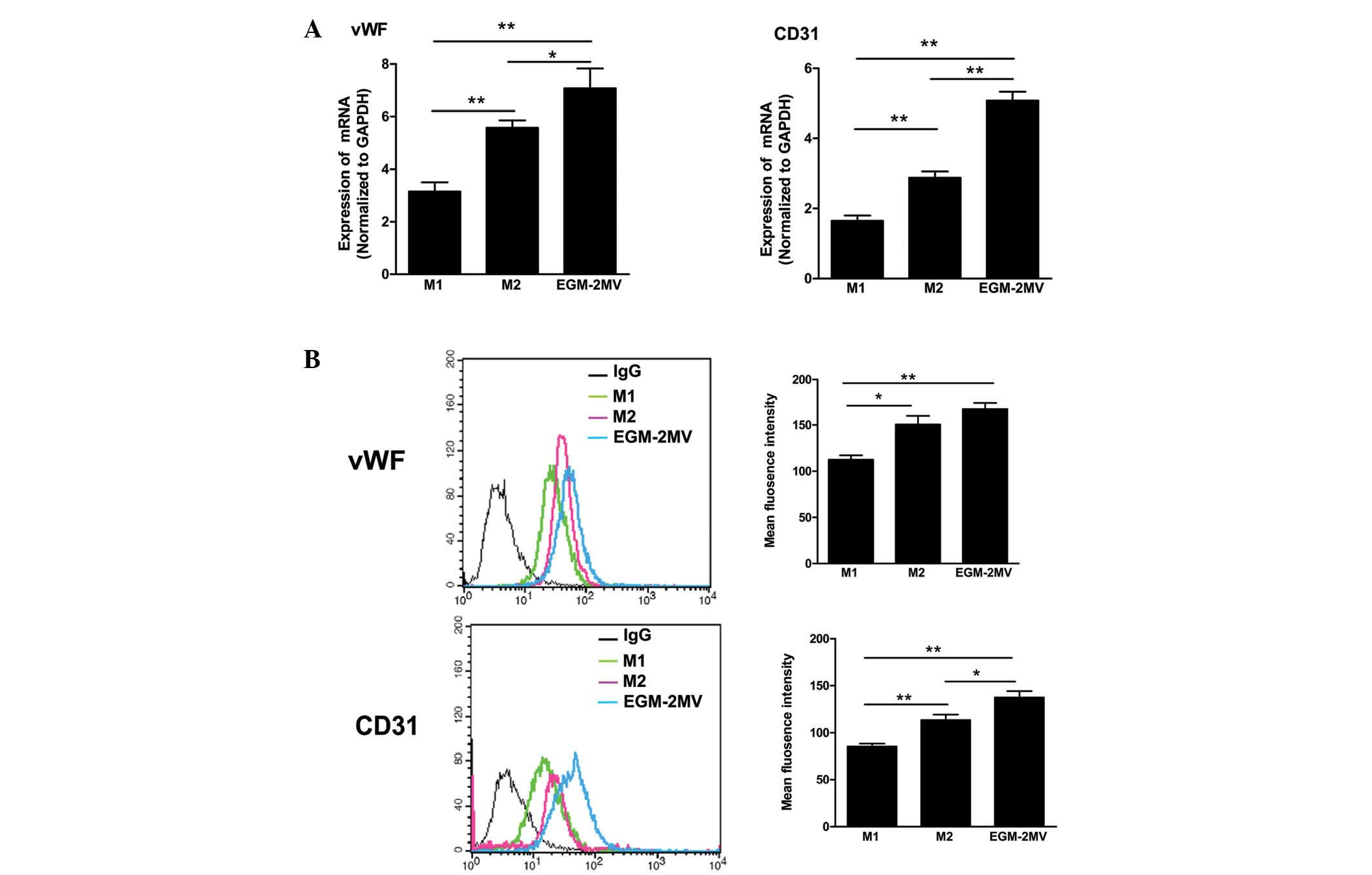 Biological Properties Of Bone Marrow Derived Early And