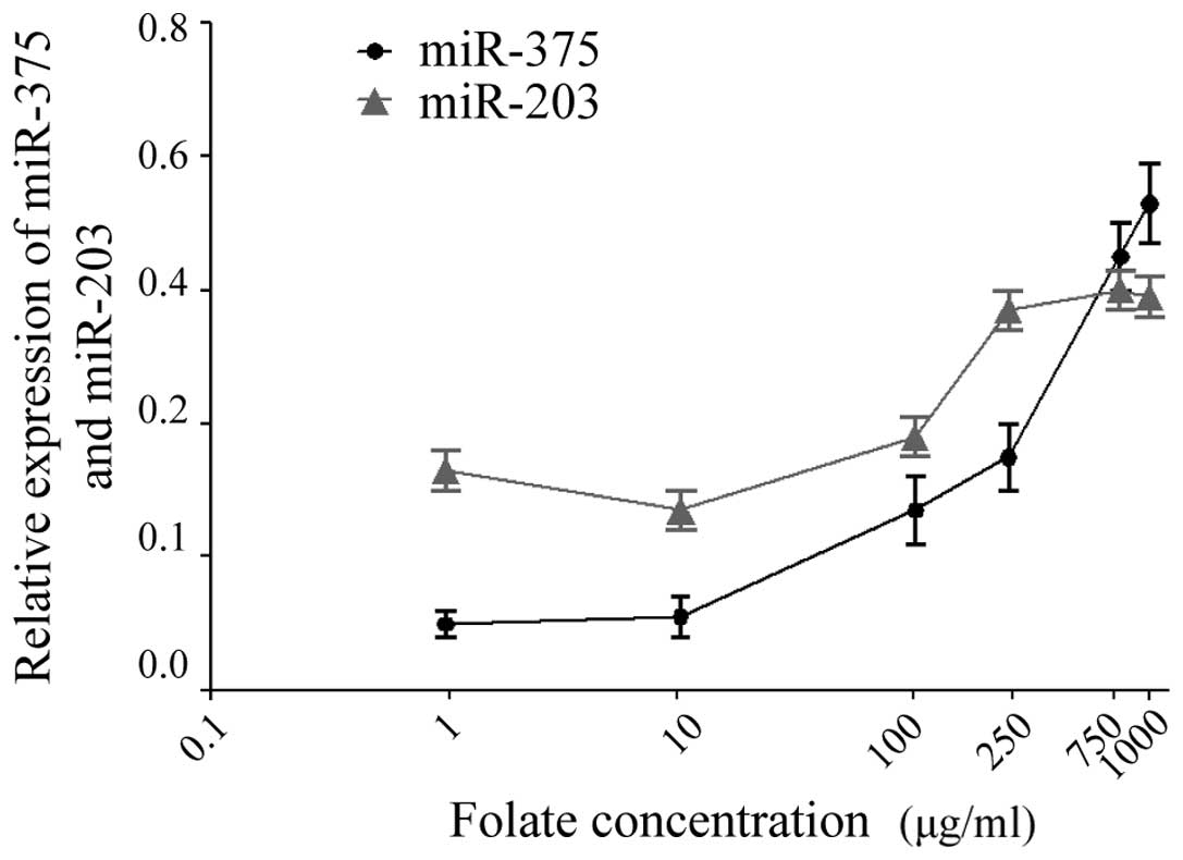 Low Folate Levels Are Associated With Methylation Mediated Transcriptional Repression Of Mir 203