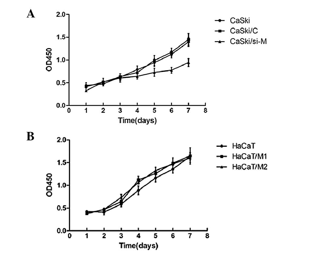 The Role Of Malat1 Correlates With Hpv In Cervical Cancer