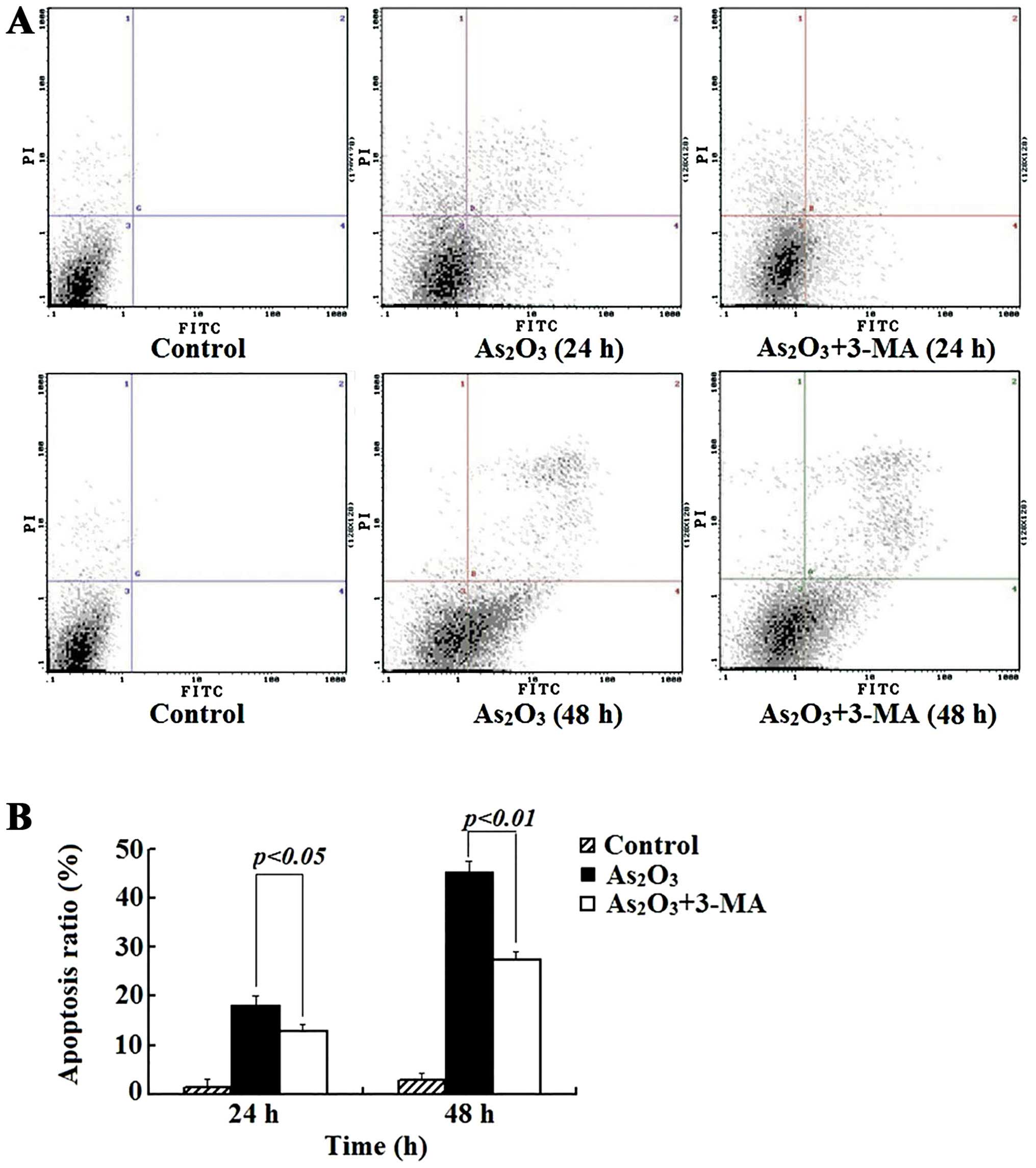 Arsenic Trioxide Induces Autophagy And Antitumor Effects