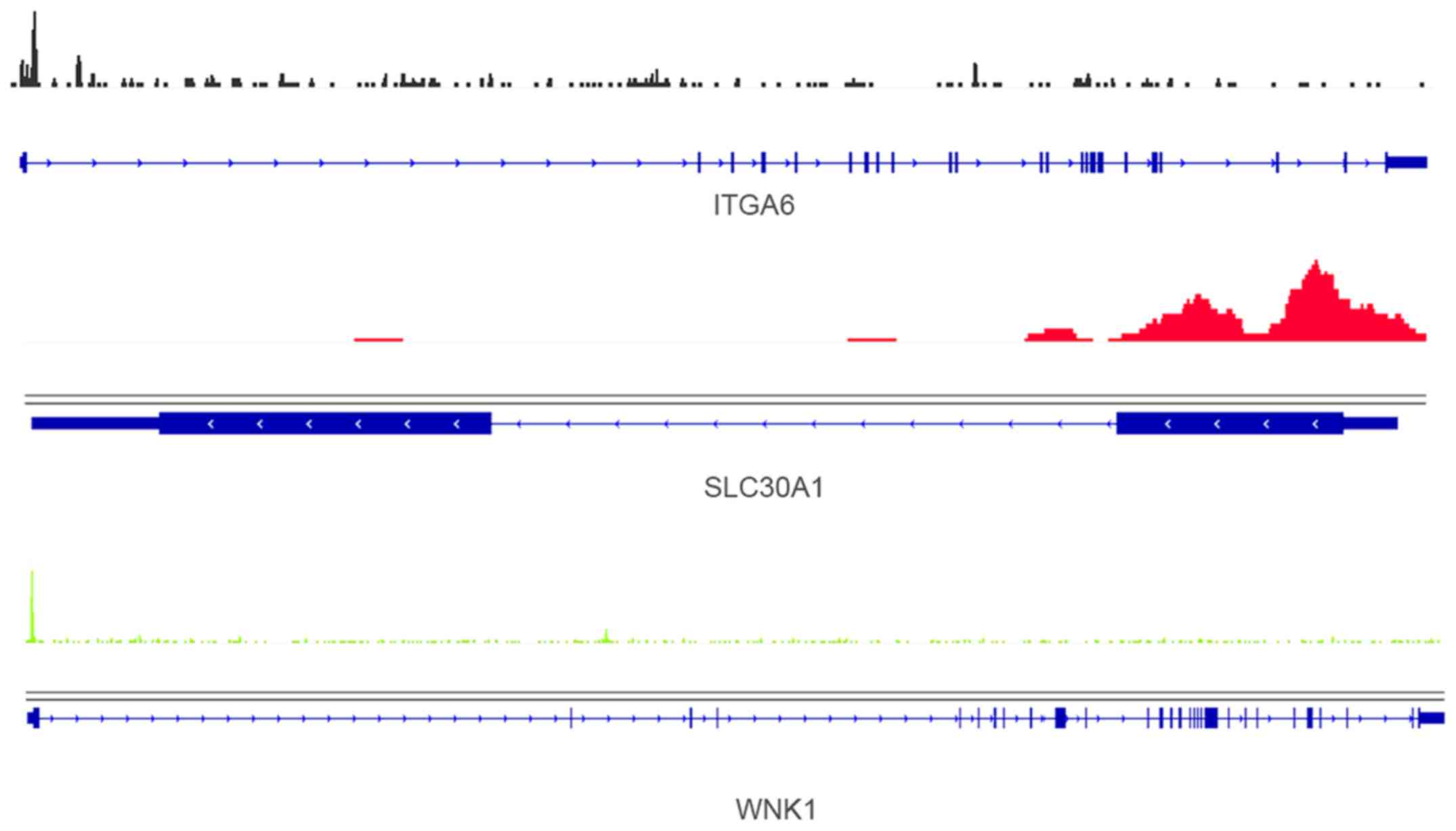 Combinedysis Of Chip Seq And Gene Microarray Datasets Identify The E2 Mediated Genes In Er