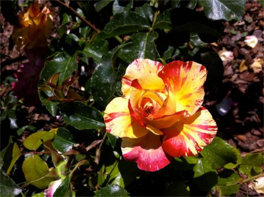 rincones secretos de barcelona rosedal parc cervantes 2
