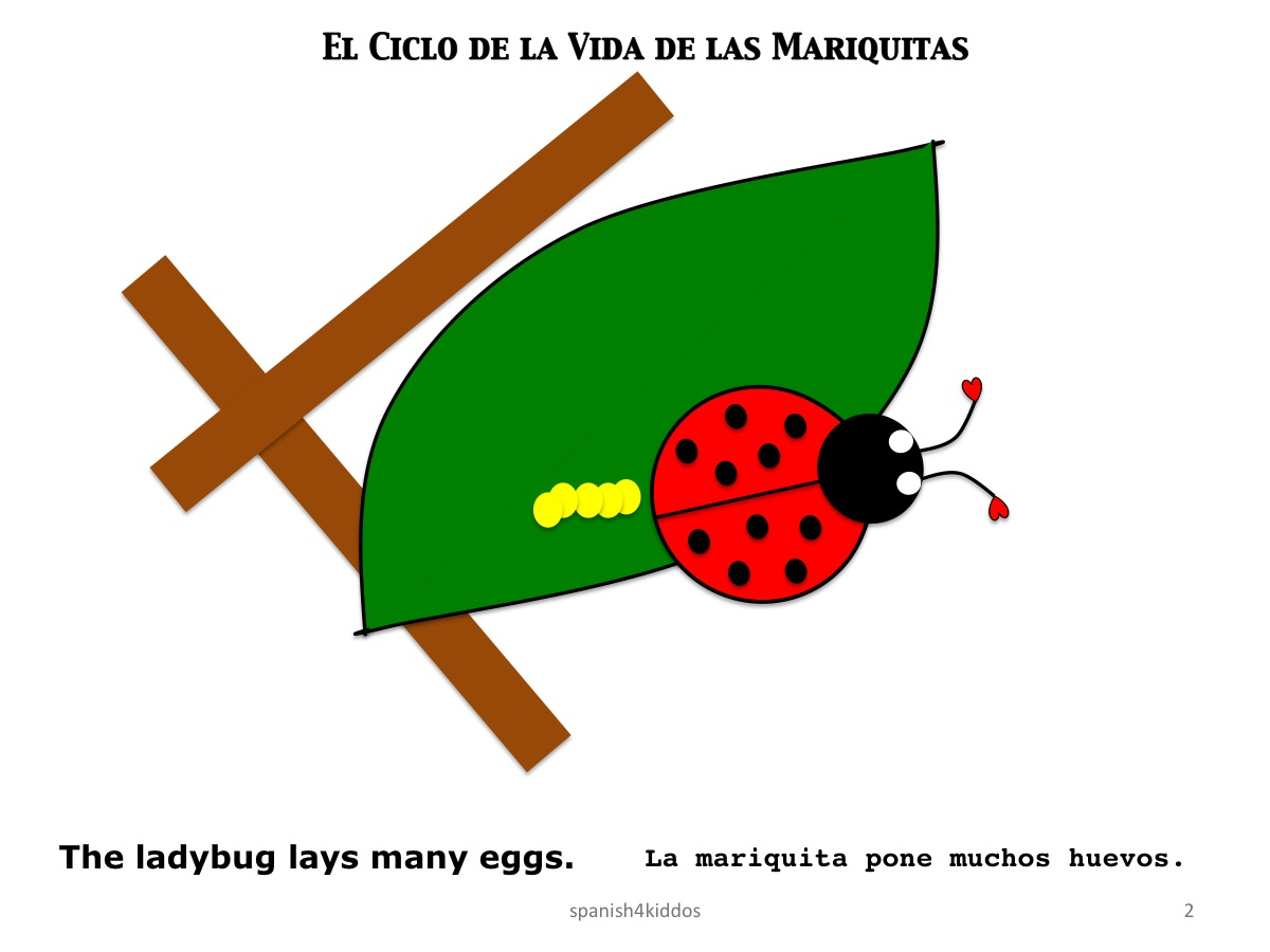life cycle ladybug2 spanish4kiddos educational resources. Black Bedroom Furniture Sets. Home Design Ideas