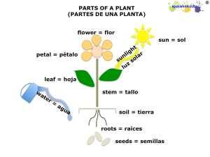 spanish lesson on plants