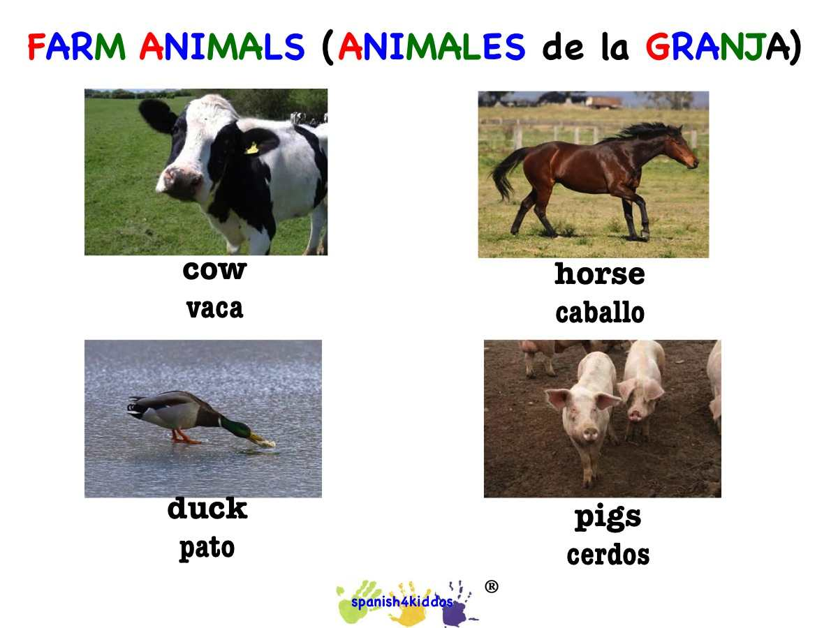Farm Animals Names In Spanish