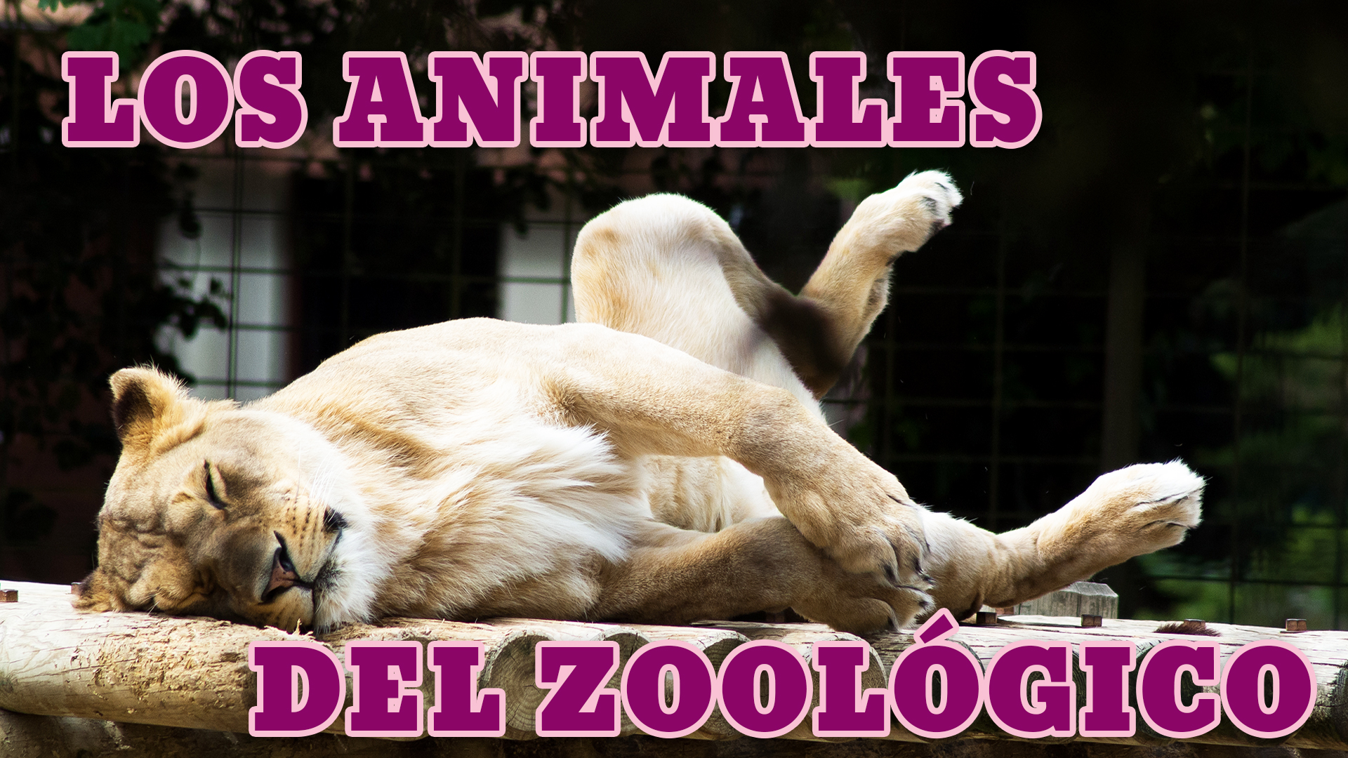 Zoo Animals In Spanish List Phrases And Listening Practice