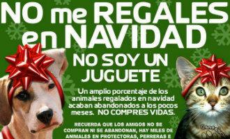 Driekoningen Campagne Spanje: Huisdieren Zijn Geen Speelgoed!