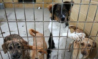 Jaarlijks Worden Er In Málaga 3.000 Honden En 900 Katten In De Steek Gelaten