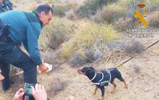 Hond en vier wilde zwijnen uit een put gered in Almería