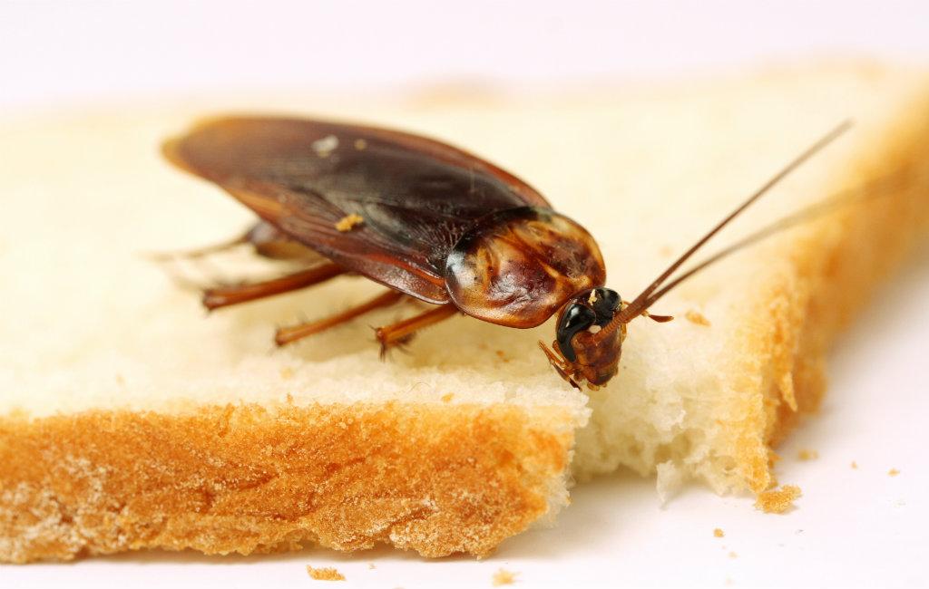 Insecten En Dieren Tijdens De Vakantie In Spanje
