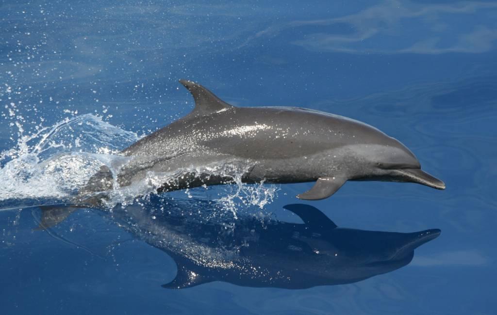 Waar kun je dolfijnen kijken in Spanje