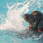balneario mascotas