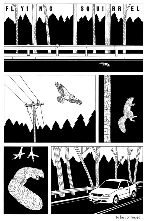 Flying Squirrel by Robert Sergel