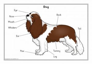 Labelled Pet Animals Posters (SB8393)  SparkleBox