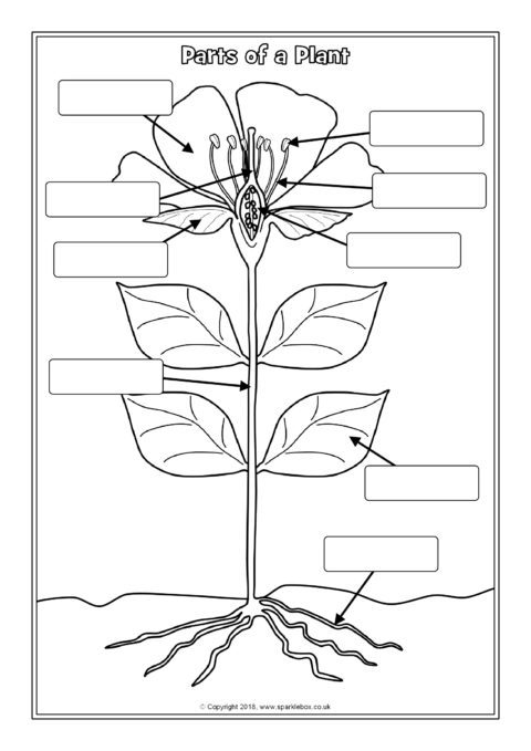 Parts Of A Plant Labelling Worksheets Sb