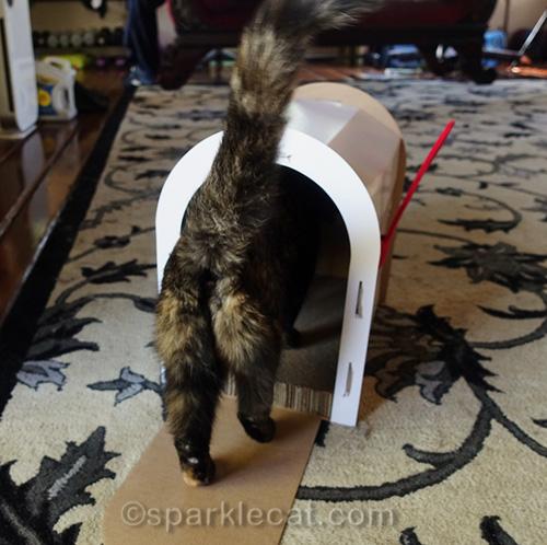 tortoiseshell cat walks into mailbox scratcher