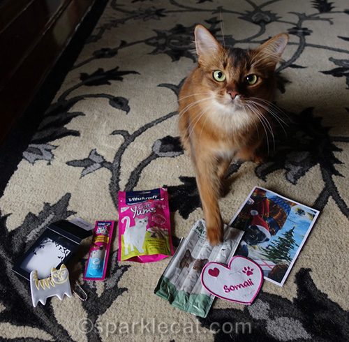 somali cat with gifts from sweden